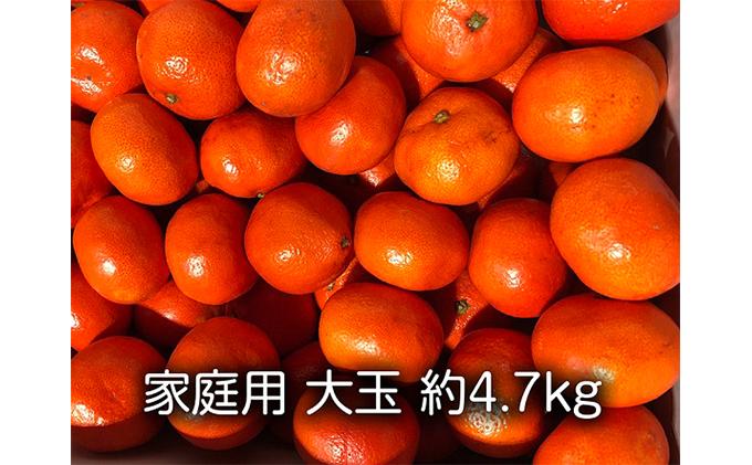 家庭用 小原紅早生みかん(大玉約4.7kg)
