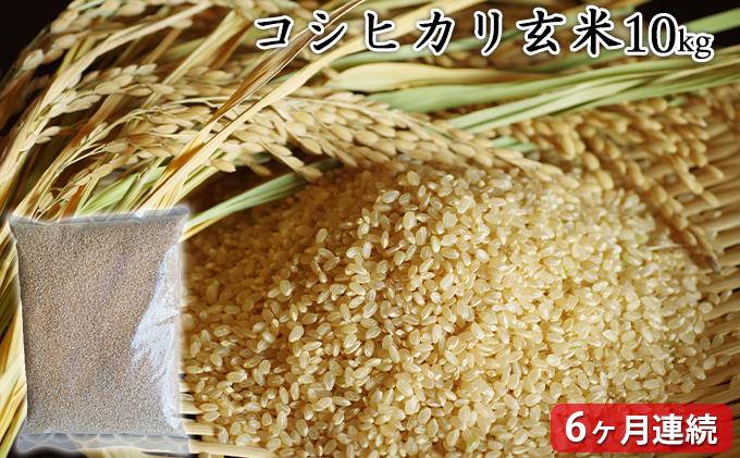 【定期6ヶ月連続】高島農場 コシヒカリ玄米10キロ