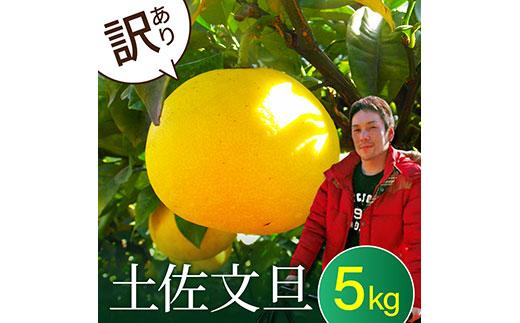 """""""高知県産""""ワケあり土佐文旦(※シミ・キズあり)5kg・サイズおまかせ"""