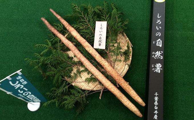 しろいの自然薯 1kg