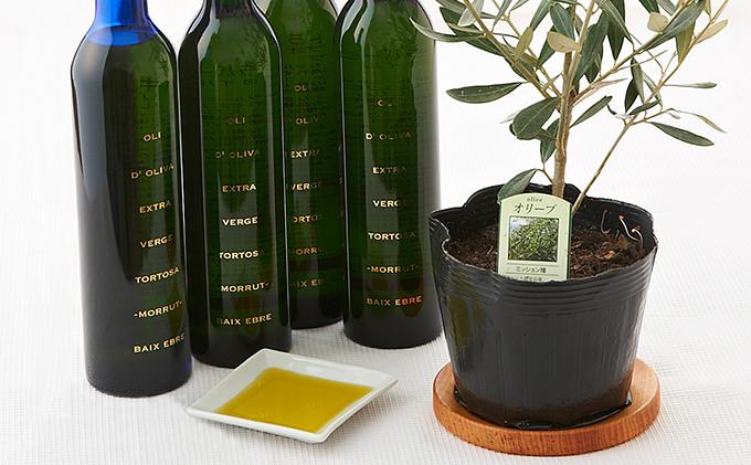 EXV. オリーブオイル トルトサ & オリーブ の 苗木 セット