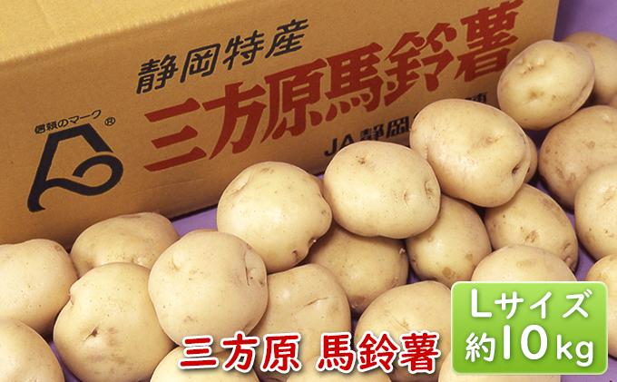 【2021年6月頃より順次発送】三方原馬鈴薯 L 約10kg※クレジット限定