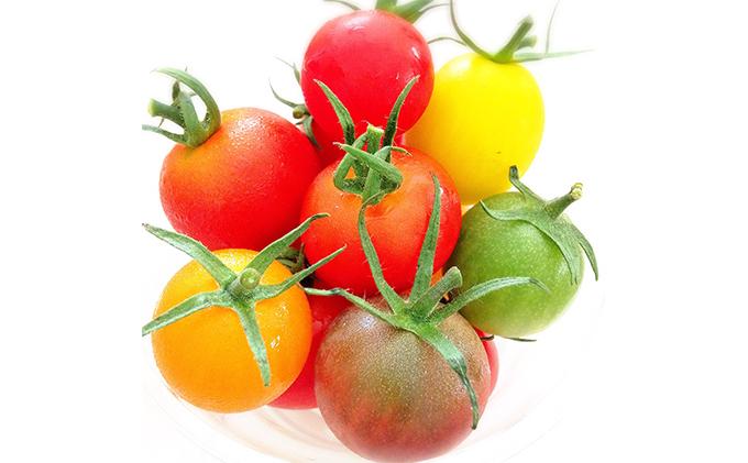 静岡県浜松市のふるさと納税 トリアンジュトマト(ミニ)5色のミニトマトのジュエリーボックス