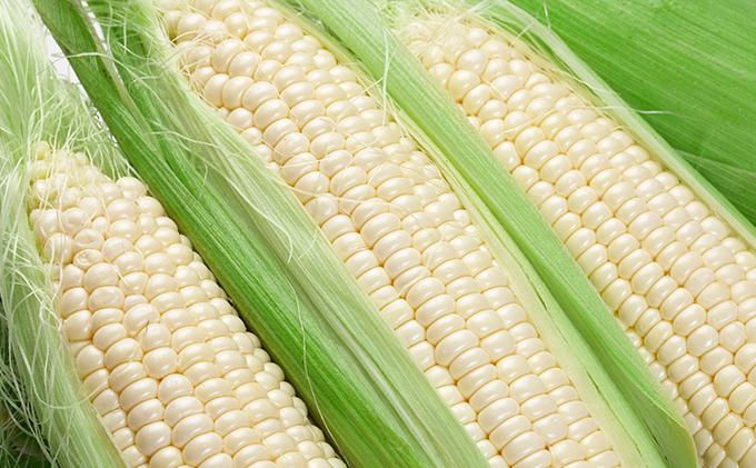 【2019年発送】道塚農園の白いとうきび ロイシーコーンL-LL 18~20本 約10kg