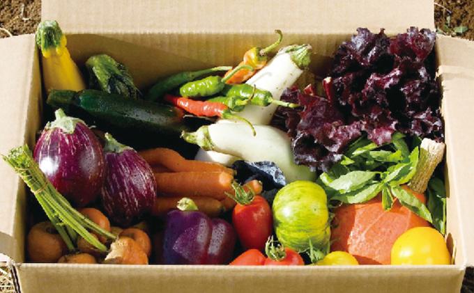 オーガニック 野菜BOX 10種類詰め合わせ