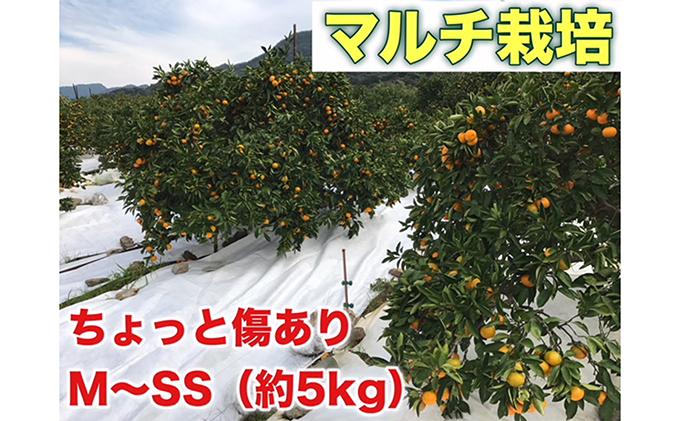 ちょっと傷あり【マルチ栽培・有田みかん】約5kg(M~SSサイズおまかせ)