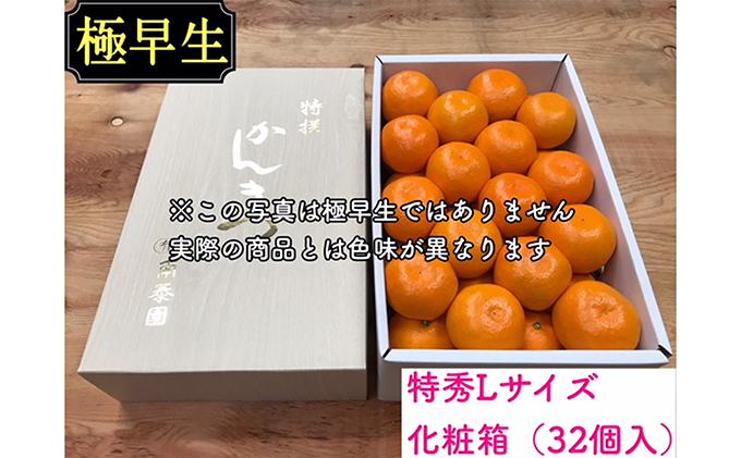 【極早生・有田みかん】化粧箱『特秀』Lサイズ32玉入