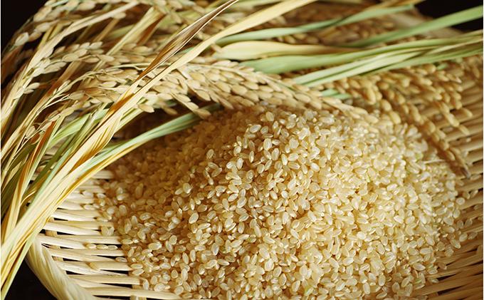 あきたこまち 玄米10kg×2 20kg