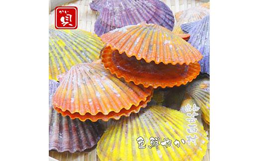 長太郎貝(ヒオウギガイ)10個入