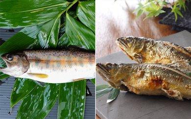 Bセット「甲州桂川の鮎とやまめ」