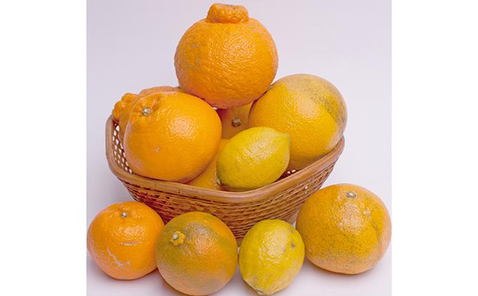 【2月発送】有田の柑橘詰合せ4kg【有田の柑橘詰め合わせ】