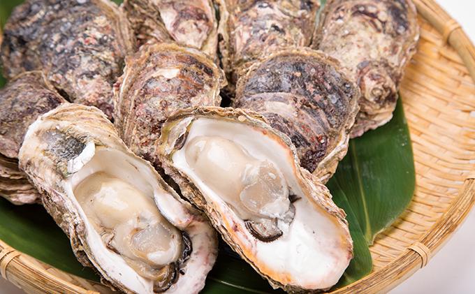 モリ旬 岡山虫明産(瀬戸内市) 牡蠣 半斗缶 殻付き 約5~6kg 12月出荷分