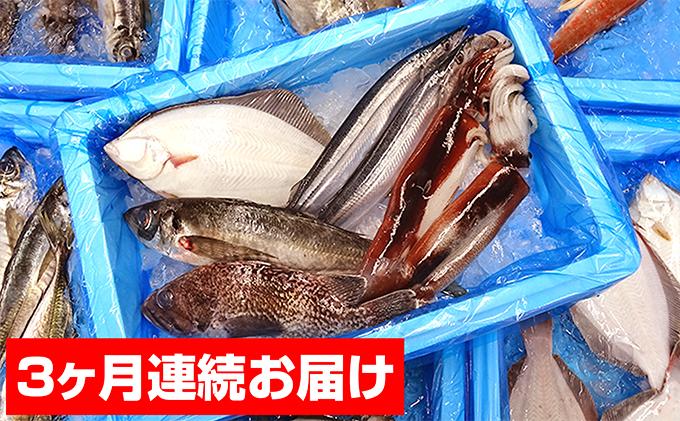 【3ヶ月連続お届け】大船渡 旬の鮮魚便!!