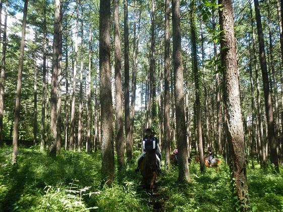 長野県小諸市のふるさと納税 まきば軽井沢 まったり100分乗馬体験 1名様 長野 信州 小諸 大自然