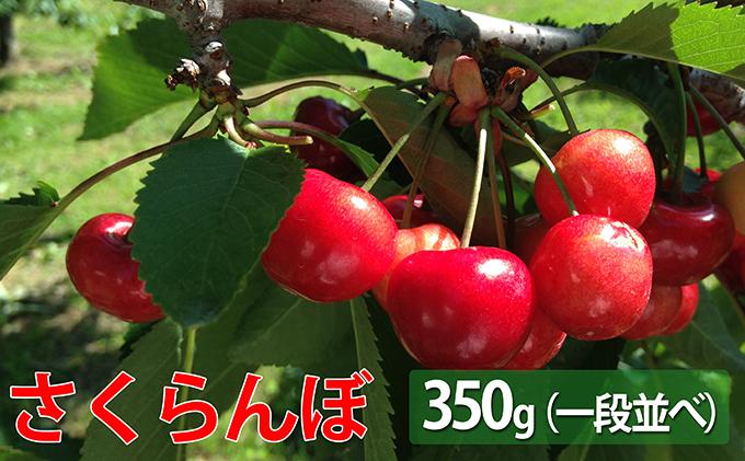 峠のふもと紅果園の大玉さくらんぼ【佐藤錦】350g<2020年出荷>