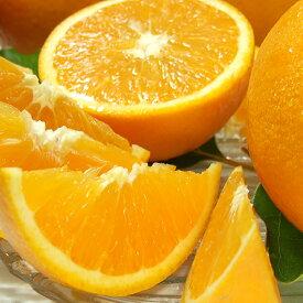 V6031_田村産バレンシアオレンジ 約5kg