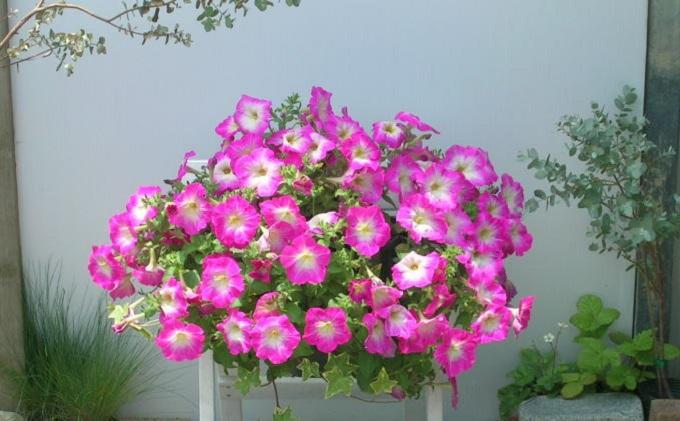 季節のお花でハンキングバスケット(ピンク系)