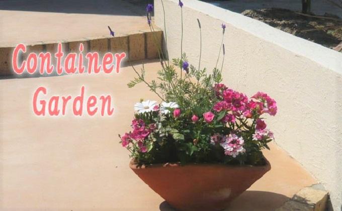 可愛いピンクのお花たっぷりの寄せ植え