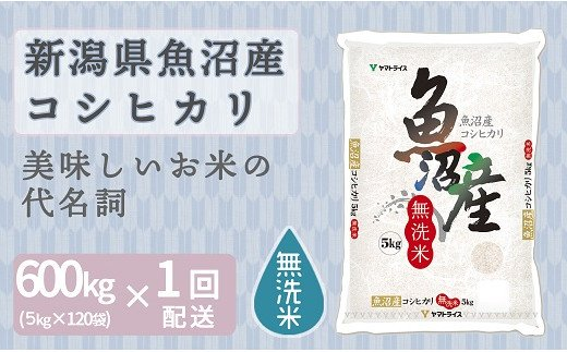 新潟魚沼産コシヒカリ 無洗米 5kg×120袋 安心安全なヤマトライス H074-144