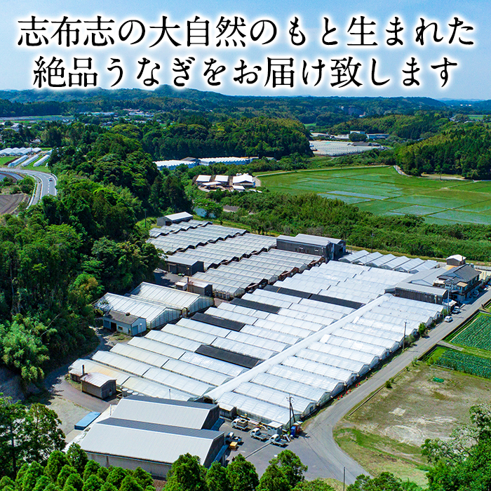 鹿児島県志布志市のふるさと納税 e0-017 うなぎの大楠<大>10尾セット計1.5kg(150g×10)