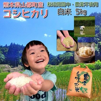 【令和2年度産】熊本県山都町コシヒカリ 白米5kg