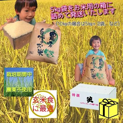 【令和2年度産】熊本県山都町イセヒカリ 白米10kg
