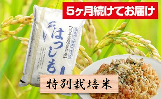 特別栽培米★[頒布会]5ヶ月★毎月白米5kg【ハツシモ】