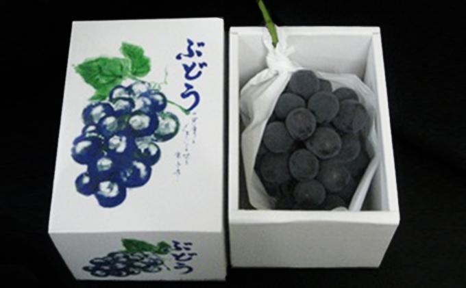 大粒で濃厚な甘み「ピオーネ」 大房1房(化粧箱入り)約600g