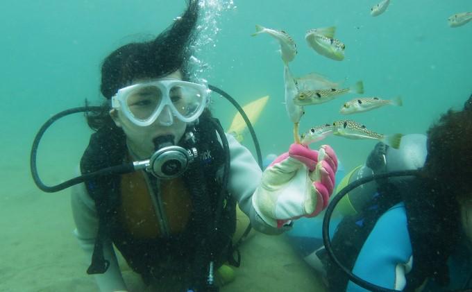 【なまはげの海でダイビング!!】 海洋体験ビーチダイビング 3名様