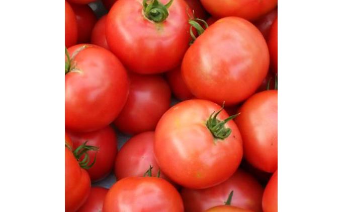 田口農園のトマト詰め合わせ(計約2.4kg)