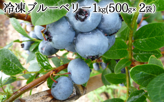自家農園産・冷凍ブルーベリー1kg(500
