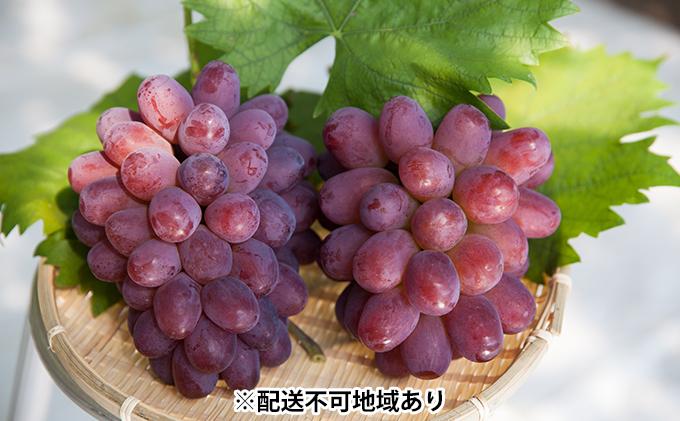 岡山県産 紫苑 (しえん) 大房2房(1房約700g)【配達不可:離島】
