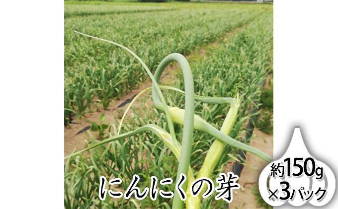 北海道上富良野町産【希少】にんにくの芽約150g×3パック