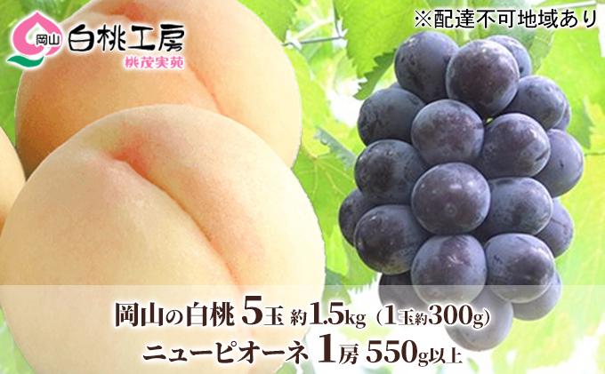 桃茂実苑 岡山 白桃(5玉)+ ピオーネ (1房)