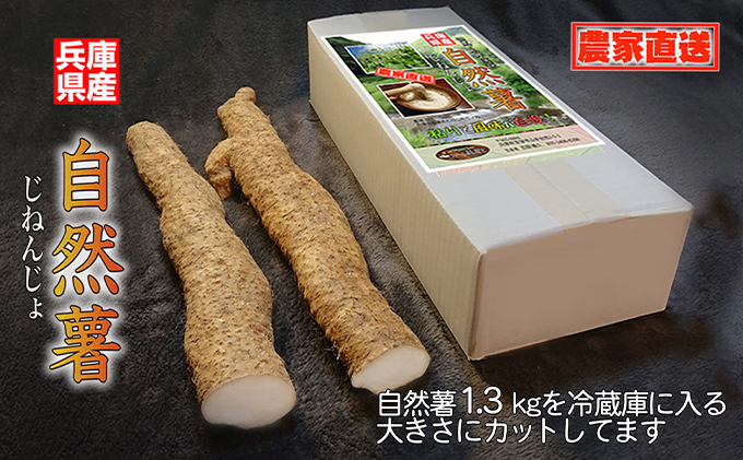 【朝来市産】特選 自然薯(じねんじょ)1.3kg《11月下旬から順次発送》