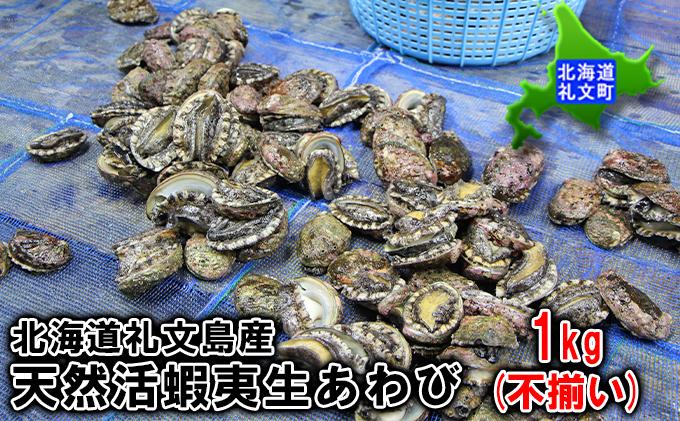 【11月中旬から発送】北海道礼文島産  天然活蝦夷生あわび  1kg(不揃い)