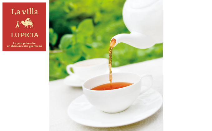 北海道のお茶【ヴァージンスノー】セット
