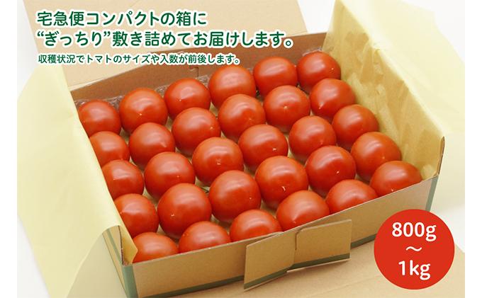 よしよし畑のあま~いトマト(中玉トマト)800g~1kg程度