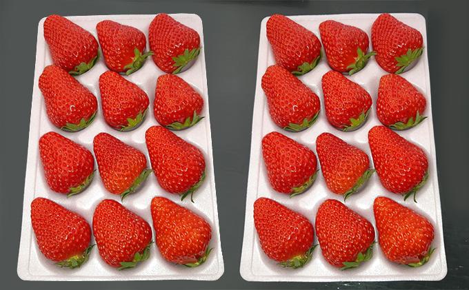 【R4年度出荷分先行受付】採れたて、新鮮いちご 2パック(24~30個)