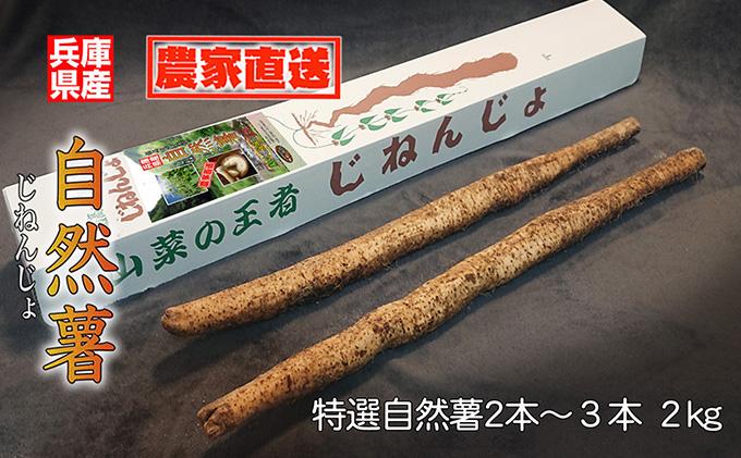 【朝来市産】特選 特大自然薯(じねんじょ)2kg《11月下旬から順次発送》