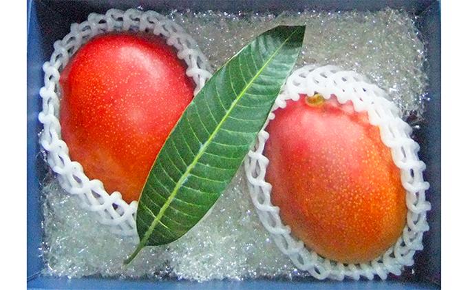 【先行予約受付中】藤枝産マンゴーアーウィン 7~8月出荷