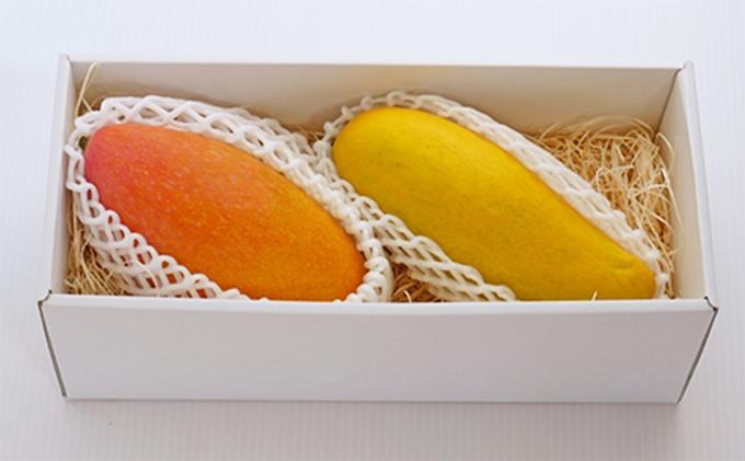 【先行予約受付中】藤枝産マンゴー赤キンコウ・マハチャノック詰め合わせ