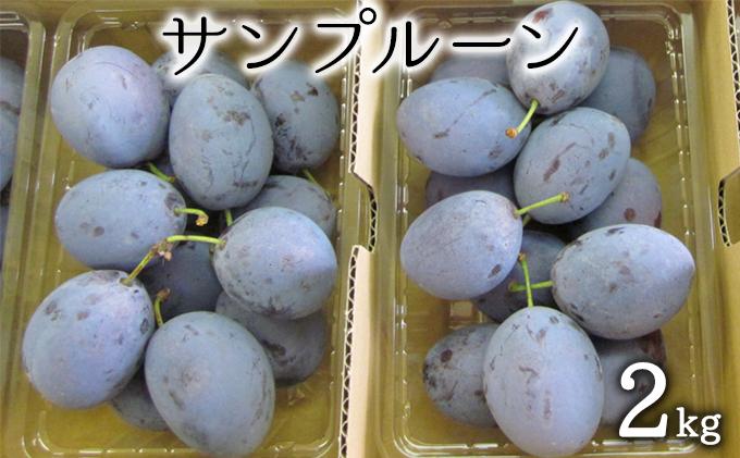 松山商店プルーン2kg(品種:サンプルーン)−特選品−(北海道仁木町産)