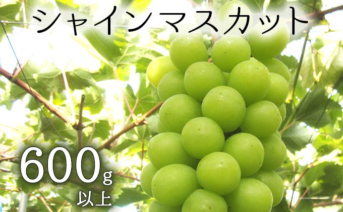 松山商店シャインマスカット−特選品−(北海道仁木町産)