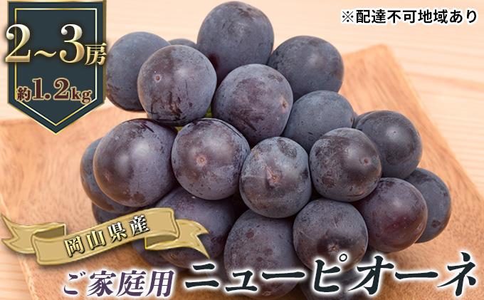 ご家庭用 岡山県産 ニューピオーネ 2~3