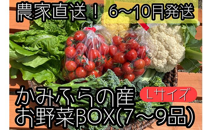 農家直送!【7~8月出荷】ミニトマト500g入り!朝採れ新鮮夏野菜ボックスL(7~9品入り)