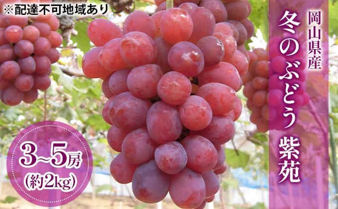 岡山県産 冬のぶどう 紫苑(種無し)約2kg(3~5房)