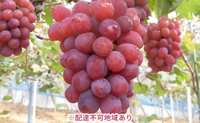 岡山県産 冬のぶどう 紫苑(種無し)約1.2kg(2房)