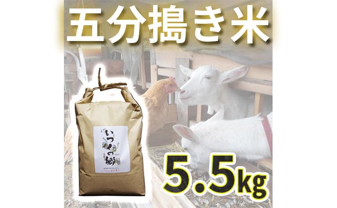 自然栽培 はざ掛け天日干しササニシキ【五分搗き米】5.5キロ