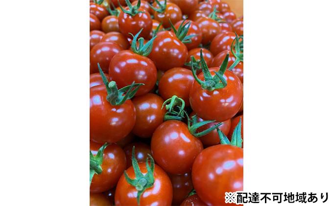 田んぼ屋たなかの【ミニトマト2.5kg】